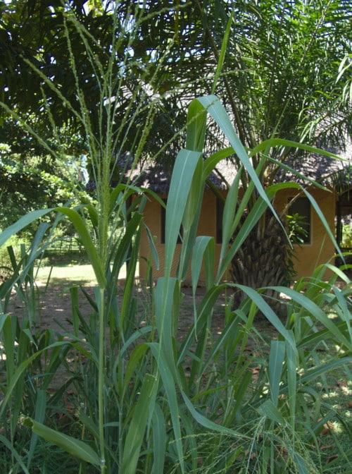 Phyto depuration plant